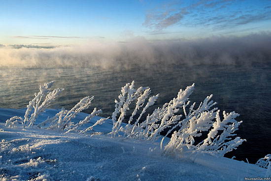 Sea smoke: On a cold winter morning, fog drifts over the open sea past frost-decorated vegetation on the island fortress of Suomenlinna, outside Helsinki.