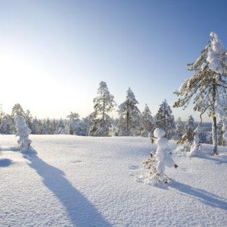 Photo: Antti Kurola / Rovaniemi Tourism & Marketing Ltd.