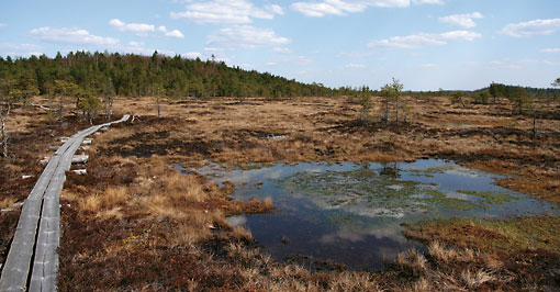 Successive ice ages and the cold climate have led to the formation of a wide range of peatland and wetland habitats around Finland.