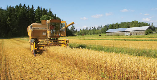 Professionelle Landwirtschaft in nördlichen Breiten: Die kurze Wachstumsperiode verlangt bei Aussaat und Ernte vollen Einsatz.