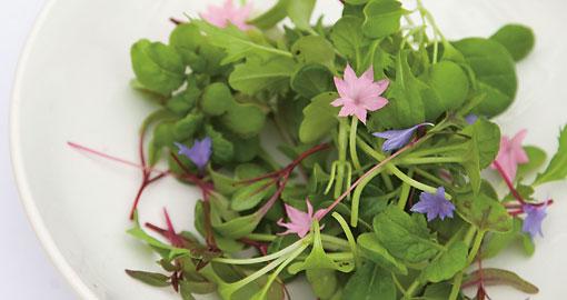 La nature finlandaise est d'une grande luxuriance en été, d'où une abondance de variétés végétales. La cueillette des herbes aromatiques sauvages correspond à une tradition séculaire, aujourd'hui relayée par la demande des consommateurs pour le bio. On trouve de ces fines herbes dans de nombreux restaurants, dont le chef est parfois allé à la cueillette lui-même !