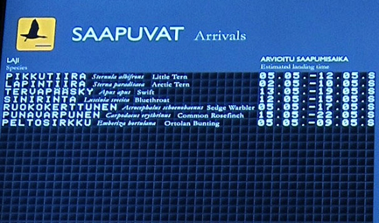 An airport-style display board at the Liminka Bay Visitor Centre shows the expected arrival and departure dates of migratory bird species.