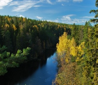 Finland, forest industry, forests, recreation, environment, sustainability, Metso, Stora Enso, Ponsse, UPM, Metsä Group, bioenergy, bio-oil