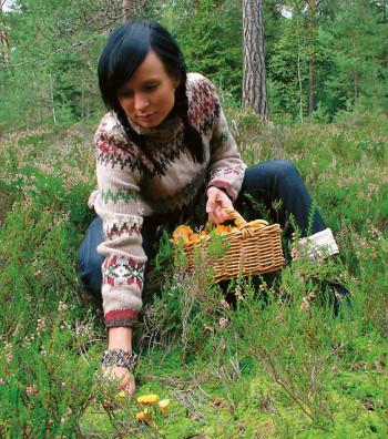 A woman picking chantarelles.