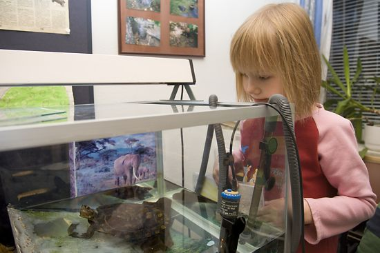 A schoolgirl looking at a tortoise in a tank.