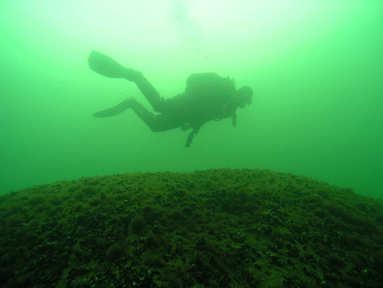 Divers collect info about conditions in the Baltic Sea in order to help protect its natural treasures. (Photo: Essi Keskinen/Metsähallitus)
