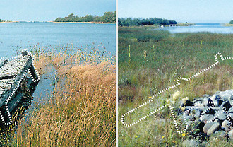 Time lapse: The Kvarken Archipelago is rising up out of the ocean by almost a centimetre (3/8 of an inch) each year. The newer photo (right) shows how the shoreline has receded over the years, with the dock's location outlined as a reference.