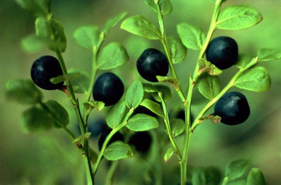 2971-berry3_b-jpg