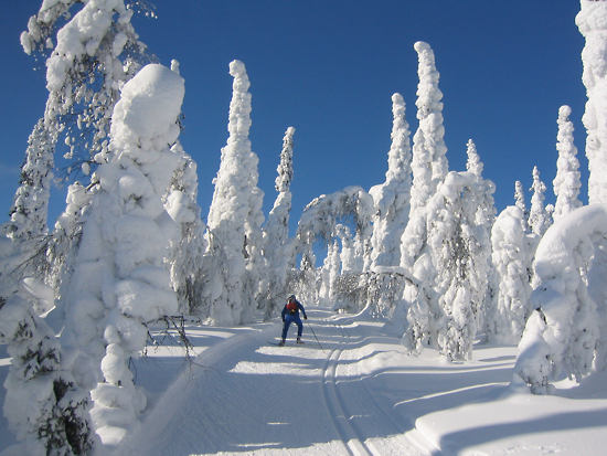A person skiing on a snowy path between snow-covered trees.