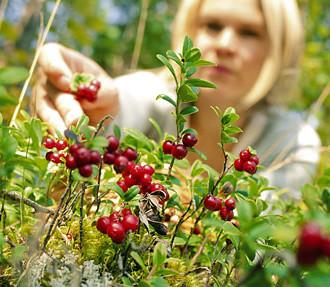 Jedermannsrecht, Beeren, Pilze, Wandern, Langlauf, Natur, Camping, Wildnis, Finnland