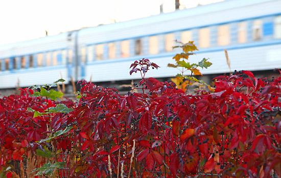 Une phase transitoire : un train se presse vers sa destination comme l'automne se presse vers l'hiver. Photo: Tim Bird