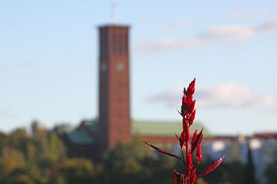 Un feuillage rouge éclatant devant le rouge brique de l'Église Saint Paul. Photo: Tim Bird