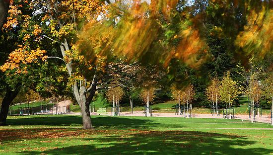 Blowin' in the wind : les couleurs se mélangent lorsque les branches sont secouées par le vent. Photo: Tim Bird