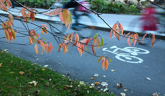 Not too hot, not too cold: A clear autumn day is a great time for a bike ride. Photo: Tim Bird