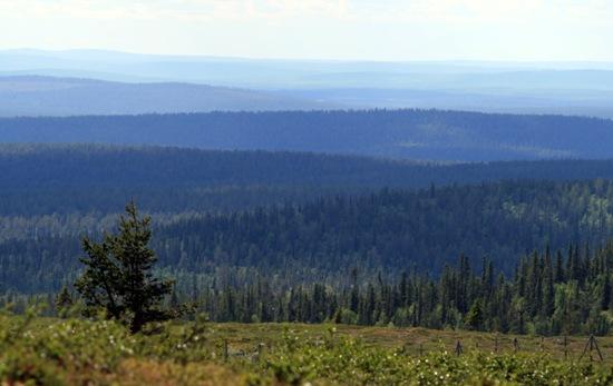 Die blauen Hügel von Inari: Mindestens 12 verschiedene Fjäll-Schichten sind auf diesen Bild zu sehen, das bei Inari, nicht sehr weit von der Nordspitze Finnlands, aufgenommen wurde.  Foto: Jukka Wuolijoki