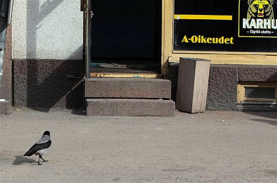 Ruhetag: Diese Krähe steuert offenbar die offene Tür einer Kneipe an. Foto: Jukka Wuolijoki