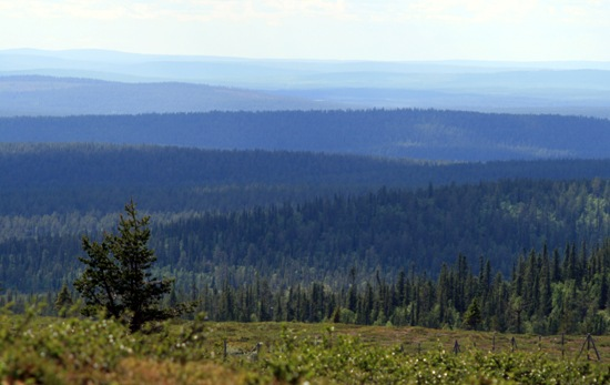 Sur les hauteurs bleutées d'Inari : on voit ici une succession de monts s'étendant sur au moins douze niveaux ; cette photo prise a été prise à proximité d'Inari, tout au nord de la Finlande. Photo: Jukka Wuolijoki
