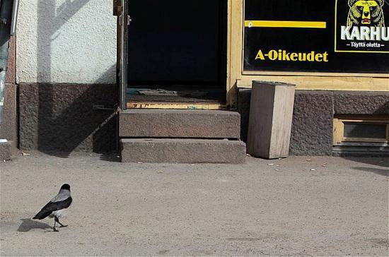 Journée de détente : ce corbeau semble bien décidé à passer la porte du bistrot. Photo: Jukka Wuolijoki