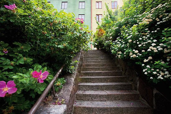 Flowers and buildings add colour to the city on this stairway off of Franzéninkatu in the Torkkelinmäki area of town. Photo: Esko Jämsä