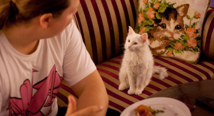 Посетители кафе с удовольствием гладят кошек. Однако, тут строго заботятся и об отдыхе кошек.
