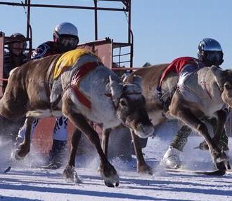Reindeer Championships, Finnish Lapland, Sámi, reindeer racing, Finland