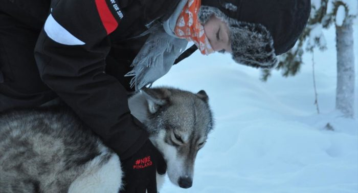 At Enontekiö in northern Finnish Lapland, the bloggers got to take part in a husky safari.