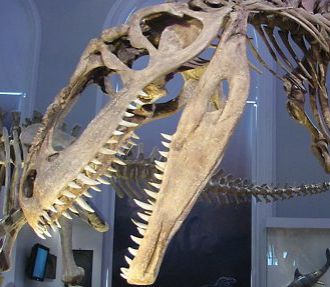 A giganotosaurus skeleton at the Finnish Museum of Natural History.