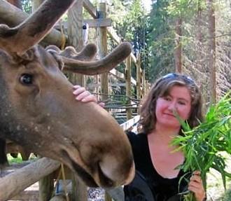 Matti-Esko, the oldest moose on the farm, receives a healthy, leafy snack.