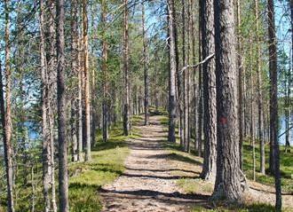 Hossa 1_ Kuva Sirke Seppänen, Metsahallitus