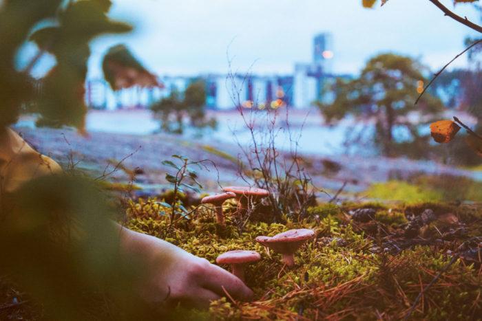 По «Праву всеобщего доступа» грибы в Финляндии можно собирать всюду. «Заходишь в лес, а там косой коси, – удивляются россияне. – Значит, в Финляндии не собирают и не едят грибы?» Это не так, и доказательства ждут вас на рынках, где полным-полно знакомых нам лисичек, а на кулинарных сайтах можно найти рецепты вкуснейших пирогов и супов с грибами.