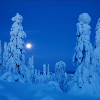 Snow-covered trees in the dark.
