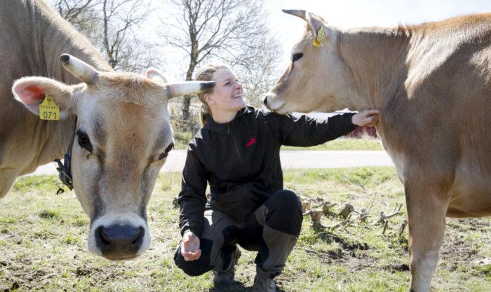 تربي جنيفر سوندمان البقر في مزرعة تمتلكها عائلتها منذ عام 1815.
