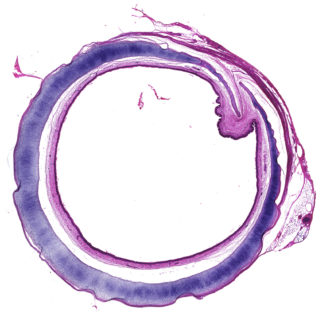 A purple circle on a white background.