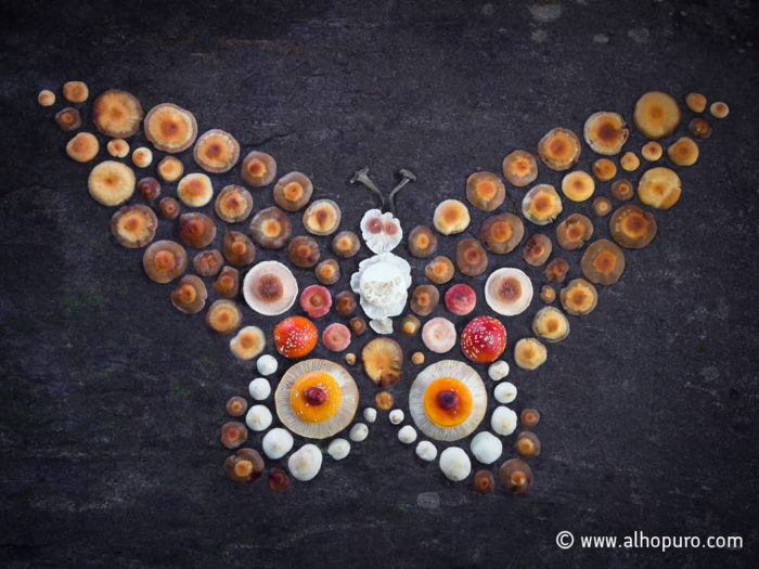 A mushroom constellation in the shape of a butterfly.