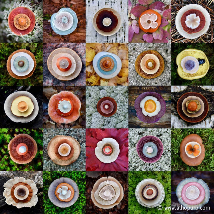 Different-coloured mushrooms on different backgrounds displayed as a grid.
