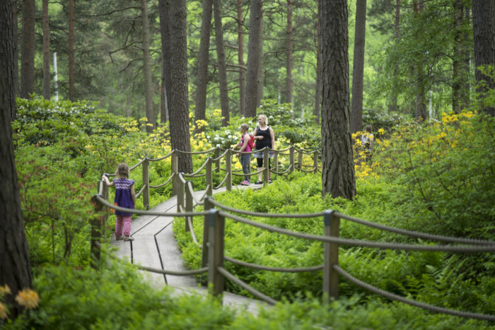 People walking on a wooden walkway in a lush green forest.