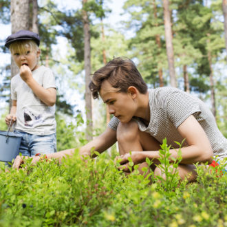 Two children pick bilberries in a forest.