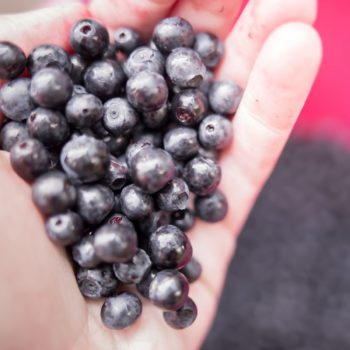 A hand holds a bunch of bilberries.
