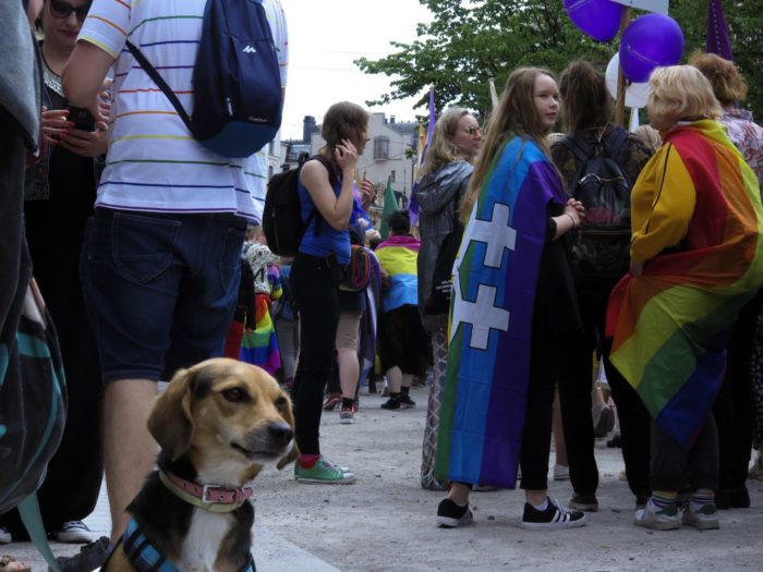 A small dog amidst the parade crowd.