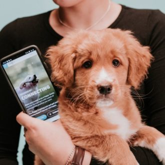 A puppy in the arms of a person with a phone in one hand. The screen of the phone says Training by connecting.