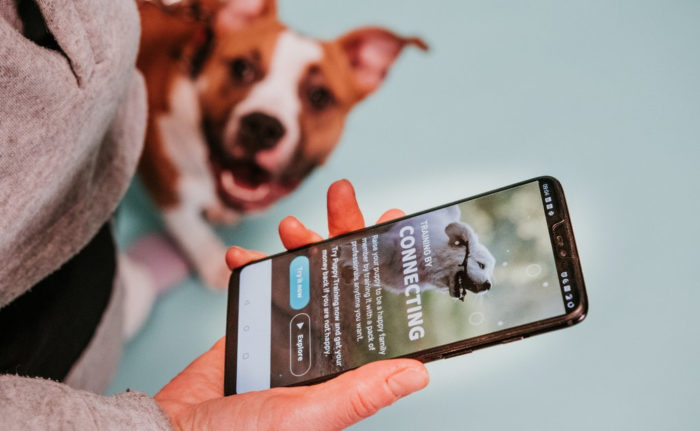 A person views the One Mind Dogs app on a phone, with a happy-looking dog in the background. The screen of the phone says Training by connecting.
