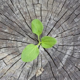 A small seedling sprouts from the middle of a cracked, weathered tree stump.