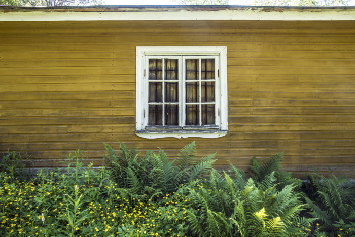 A yellow wood plank wall with a white-paned window, green foliage and yellow flowers in front of the wall.