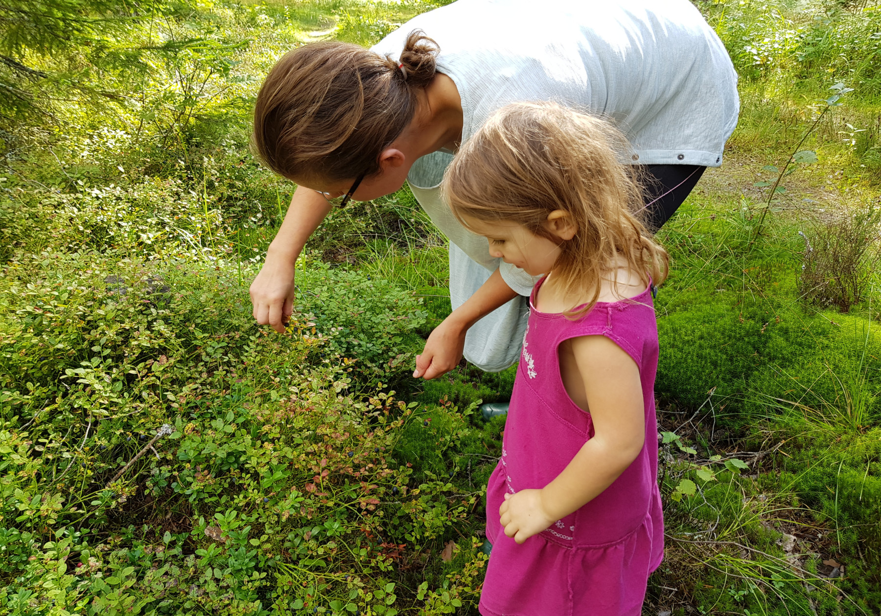Finding the fruits of the Finnish forest