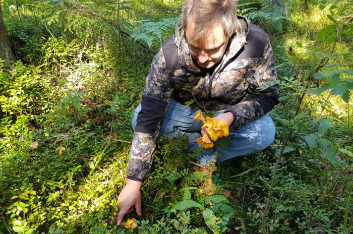 Un homme cueille des champignons dans la forêt.