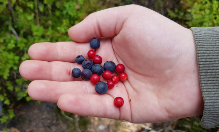An outstretched hand holds blue and red berries.