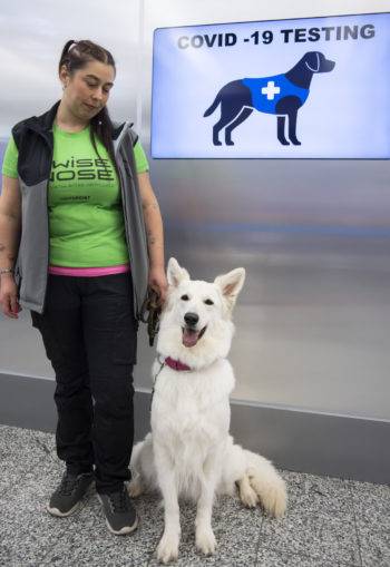 A woman stands beside a sitting white dog in front of a screen that shows a drawing of a dog and the words Covid-19 testing.