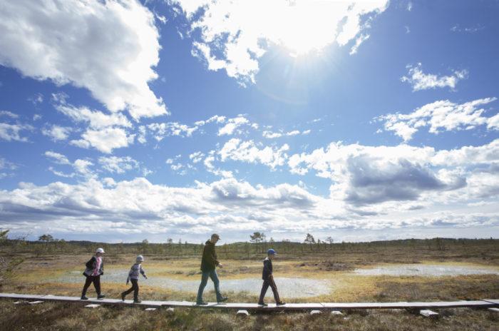 Четыре человека идут по деревянным доскам в ландшафте с маленькими прудами.