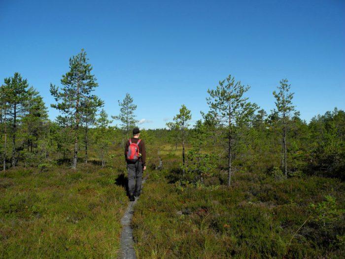 Треккер идет по деревянной дорожке по ландшафту с травами и деревьями.
