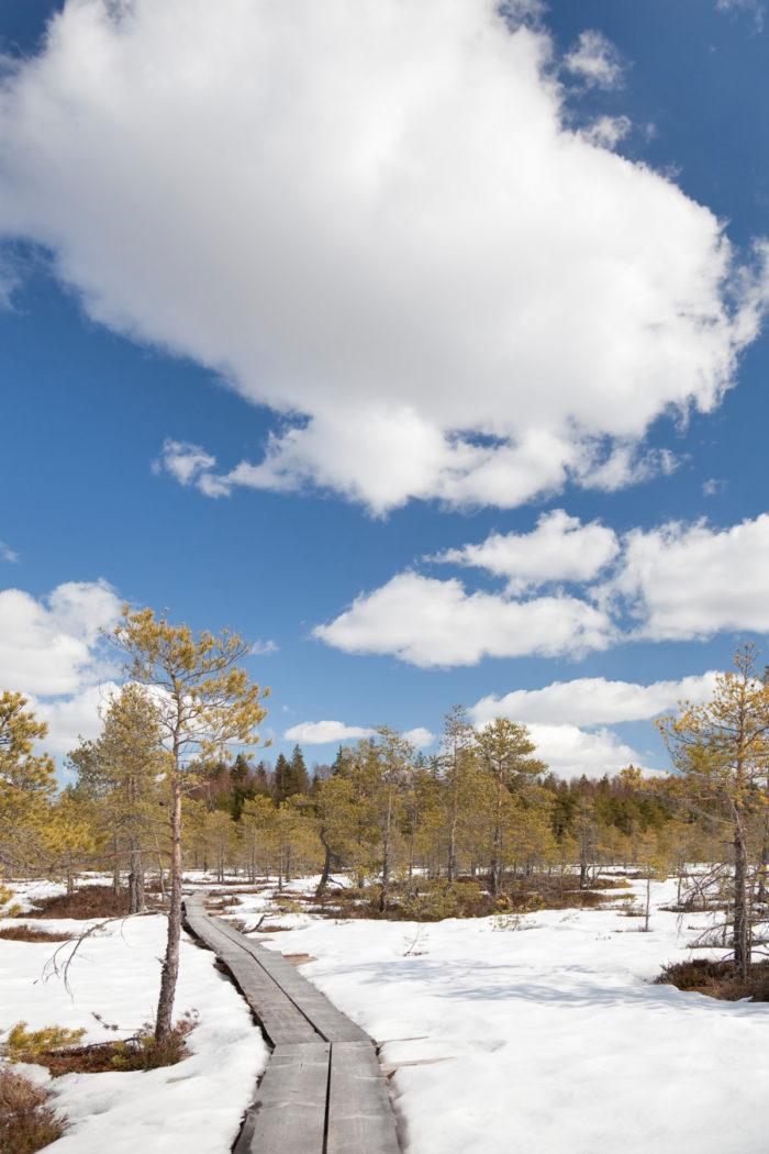 Дорожка из деревянных досок, окаймленная деревьями и заснеженной землёй.